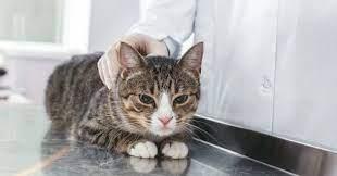 Comment savoir si chat est-il malade